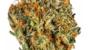 Lime Marshmallow | Hybrid